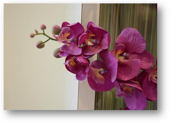 Orchidee�n die de kapsalon van Welterusten uw Nachtmode specialist sieren.